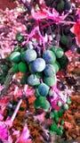 Romance de la fruta de la uva Fotografía de archivo libre de regalías