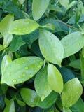 Romance de vert sous la pluie Photos stock