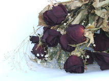 Romance is Dead. Bouquet of dead roses (isolated royalty free stock photo
