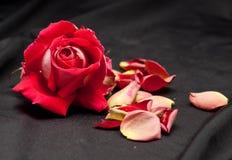 Romance dispersado imagen de archivo libre de regalías