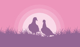 Romance dove on hill valentine theme Royalty Free Stock Photography