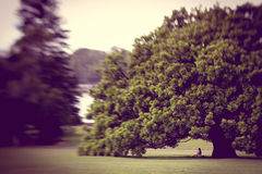 Romance. A dreamlike scene of a couple sitting under a tree Stock Photo