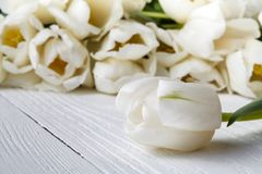 Romance gift, white tulips on bright wooden background Royalty Free Stock Photography