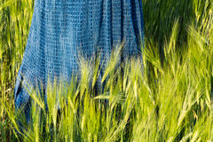 Romantic spring scene with blue skirt in green barley field. Hordeum vulgare. Long female dress in the grain spikes of sunlit cornfield. Beautiful sunny weather stock photo