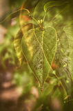 Romance leaf Stock Photo