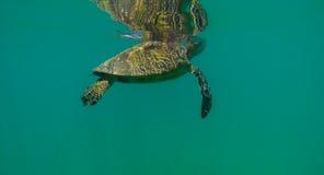 Romance in the Mirror. Waikiki Beach, Oahu Hawaii Sea Turtle Stock Photography