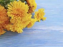 Romance naturel de floraison de fleur de frontière de jaune de chrysanthème sur un fond en bois bleu image libre de droits