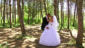 Romance Newlyweds Walk In The Woods stock video footage
