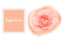 Romance orange rose card isolated on white background. Stock Photography