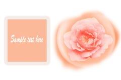 Romance orange rose card isolated on white background. Stock photo Stock Photography