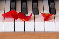 Romance. Scarlet rose petal are lying on piano keys, ready for romance Royalty Free Stock Image