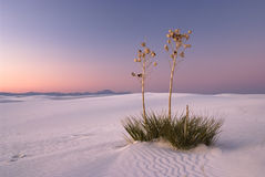 Romance in the White Sands Stock Images