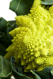 Romanesco. Single romanesco vegetable isolated on white Royalty Free Stock Images
