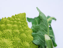 Romanesco. A green organic Brassica Oleracea, a variant form of cauliflower commonly called Romaneco Cauliflower which is also known as Romanesco Broccoli. The Royalty Free Stock Photos