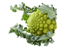 Romanesco. Head of romanesco on white background Royalty Free Stock Photography