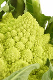 Romanesco Royalty Free Stock Image