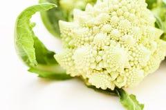 Romanesco Brassica Oleracea, rzymski kalafior odizolowywający na białym tle z przestrzenią dla teksta fotografia royalty free