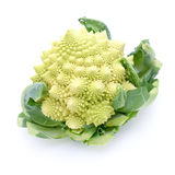 Romanesco broccoli. On white ground Stock Images