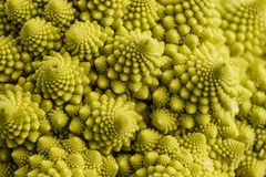 Romanesco broccoli Royaltyfria Foton