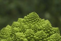 Romanesco broccoli Fotografering för Bildbyråer