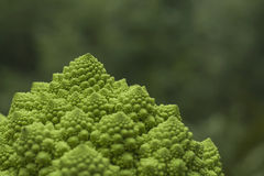Romanesco broccoli Royaltyfria Foton