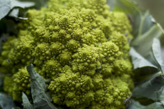 Romanesco broccoli Royaltyfri Bild