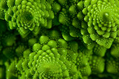 Romanesco broccoli cabbage marco Stock Image