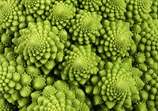 Romanesco broccoli cauliflower macro background Royalty Free Stock Photography