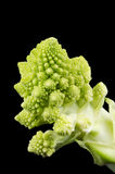Romanesco Broccoli Floret on Black Background Stock Image