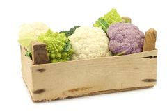 Romanesco broccoli, fresh cauliflower, purple cauliflower and green broccoli. In a wooden crate on a white background Stock Photography