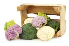 Romanesco broccoli, fresh cauliflower, purple cauliflower and green broccoli. In a wooden crate on a white background Stock Image
