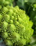 Romanesco Broccoli Stock Image