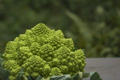 Romanesco broccoli Royalty Free Stock Images