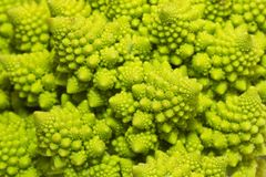 Romanesco broccoli macro close-up. Intricate geometric shapes of the romanesco broccoli which have a natural bright chartreuse green color royalty free stock photography