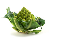 Romanesco broccoli or Roman cauliflower isolated on a white back Royalty Free Stock Photography