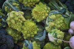 Romanesco Broccoli or Roman Cauliflower. Pointy, fractal shaped Romanesco Cauliflower or Romanesco broccoli, sometmes known as Roman cauliflower, Broccolo stock photos
