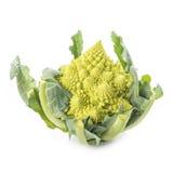 Romanesco broccoli vegetable isolated on white background Royalty Free Stock Image