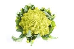 Romanesco broccoli vegetable isolated on white background Royalty Free Stock Images