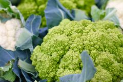 Romanesco brocolli. Romanesco superficially resembles a cauliflower, but it is chartreuse in color, and its form is strikingly fractal in nature. The number of Royalty Free Stock Photography