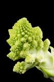 Romanesco-Brokkoli Floret auf schwarzem Hintergrund Stockbild