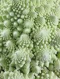 Romanesco brokuły Obrazy Stock