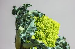 Romanesco brokuły Zdjęcia Stock