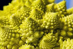 Romanesco cabbage background royalty free stock photos