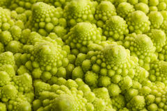 Romanesco cabbage macro Royalty Free Stock Images