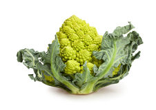 Romanesco cabbage Royalty Free Stock Image