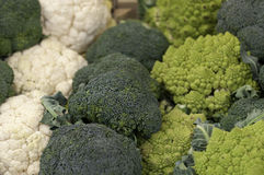 Romanesco Cauliflower and Broccoli Stock Images
