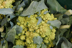 Romanesco cauliflower, Romanesco broccoli Royalty Free Stock Photography