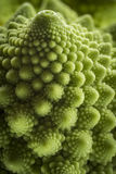 Romanesco Florets in a logarithmic spiral Royalty Free Stock Photo