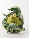 Romanescobroccoli Stock Afbeelding