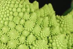 Romanescu Brassica Oleracea closeup Stock Image